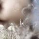 Allergie – Praxis Hautarzt Luderschmidt München
